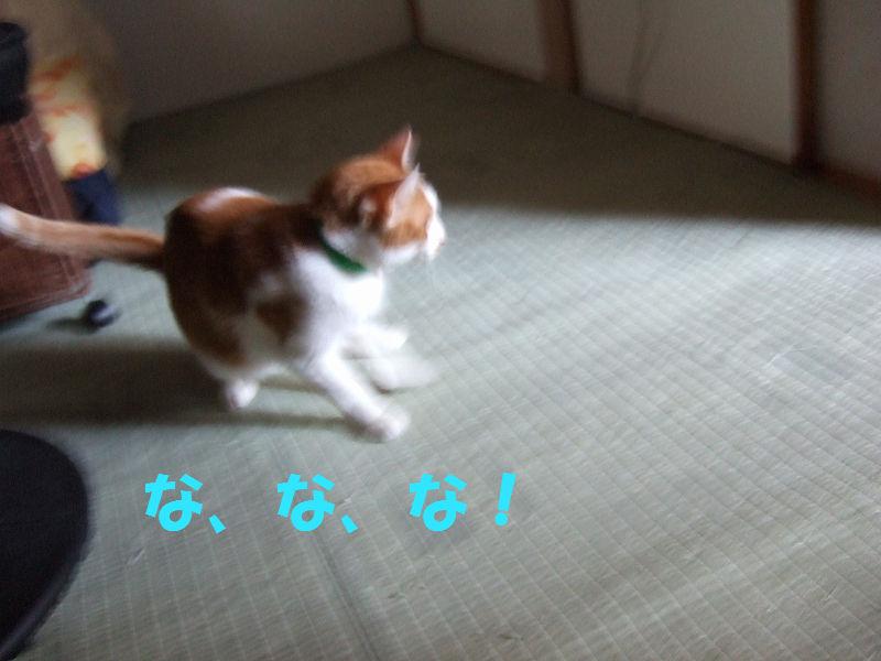 2008_0612_1