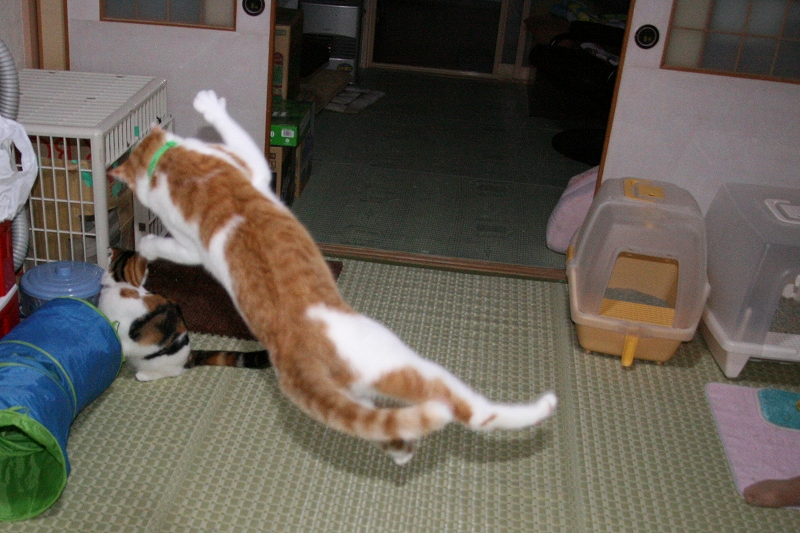 2008_0930_4