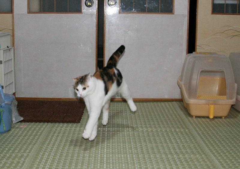 2008_0930_8